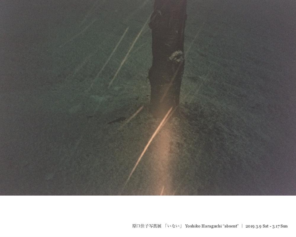 Galerie de RIVIERE展示情報 原口佳子写真展「いない」 2019.3.9 SAT - 3.17 SUN